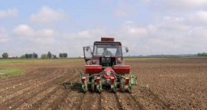 sjetva kukuruza